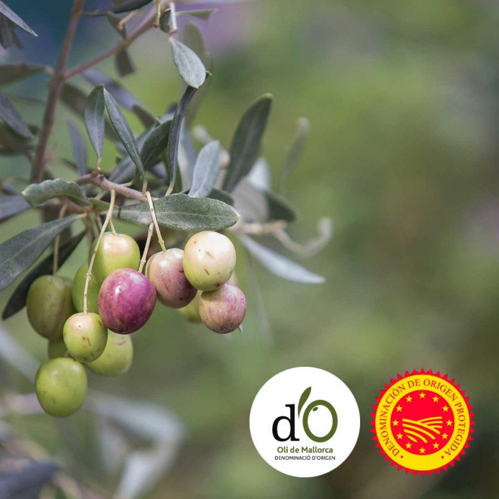 aceites de oliva con denominacion de orgien Mallorca, oli de Mallorca