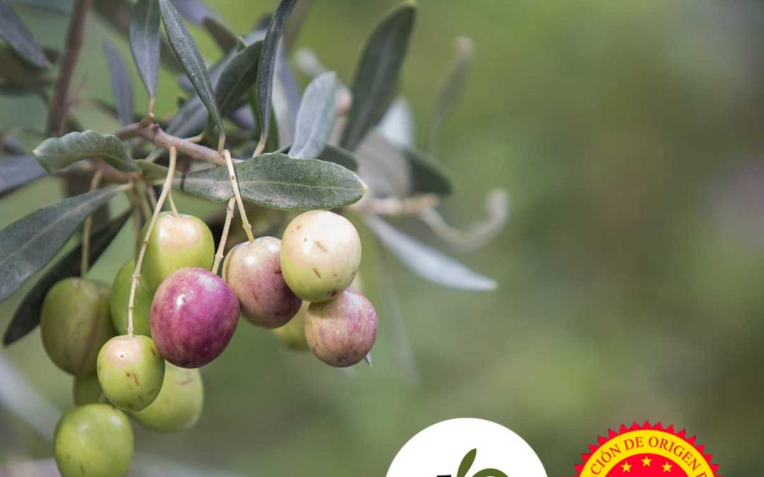 Denominación de Origen: Oli de Mallorca